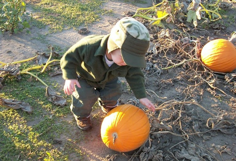 Elmer Fudd Hits The Punkin' Patch