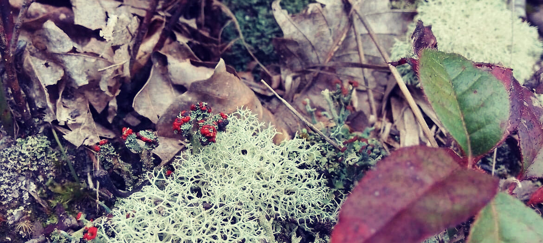 Underbrush and God